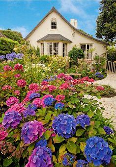 ~Carmel Garden Cottage~  Look at those gorgeous hydrangeas~