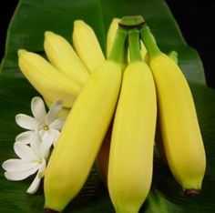 We ate these on Oahu. They are small perfect tasting. They have them in Maui thing I DO is buy these as soon as I can. Has a peach looking center. And does taste like banana apple. Hawaiian Candy, How To Grow Bananas, Fruit Drinks, Tropical Fruits, Candy Apples, Hawaiian Islands, Tropical Paradise, Big Island, Beautiful Islands