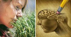 Esistono alcuni rimedi e abitudini che possono rinforzare le capacità intellettive e migliorare la memoria, potenziando le funzioni cerebrali.