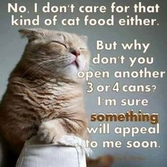 This is sooooo true!!  On a bad day, I might end up with  5-6  cans of cat food  piled up on the counter, slated to be fed to the strays at night, while my brood of three cats cry for me to try again!