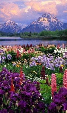 Travel Discover These 21 Natural Places Prove How Colorful and Beautiful Our World Is Wildflower Heaven Grand Teton National Park Wyoming USA Beautiful World, Beautiful Places, Beautiful Gardens, Beautiful Scenery, Beautiful Pictures, Beautiful Norway, Beautiful Beautiful, Beautiful Flowers, Heaven Pictures