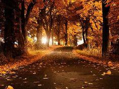 I love to walk down that beautiful road...