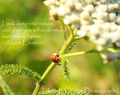 Custom Quote - 8x10 Nature Photography Print. $25.00, via Etsy.