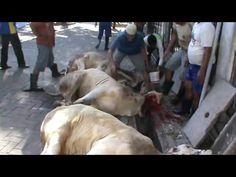 Cow Qurbani Eid Ul Adha 2015