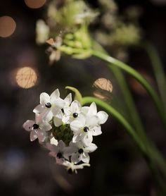 Flowers, Plants, Instagram, Plant, Royal Icing Flowers, Flower, Florals, Floral, Planets