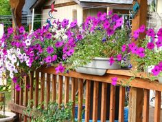 Petunias Overflowing from Railing Planters Trees For Front Yard, Front Yard Decor, Front Yard Design, Front Yard Landscaping, Luxury Landscaping, Deck Railing Planters, Deck Railings, Porch Planter, Railing Ideas