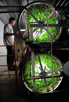 Urban farming in a warehouse.