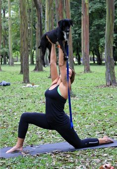 9 best funny animal yoga poses images  animal yoga how