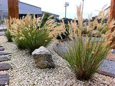 Achnatherum calamagrostis Gravel Garden, Garden Plants, Stipa, Low Maintenance Garden, Ornamental Grasses, Small Gardens, Shrubs, Perennials, Lawn