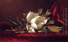 Martin Johnson Heade : The Magnolia Blossom