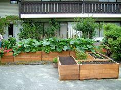 viele-grüne-pflanzen-coole idee-wunderschön wirkend