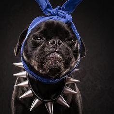 The_Pug_Life_Adorable_Portraits_Of_Lovable_Pugs_Dressed_As_Hip_Hop_Artists_2015_06