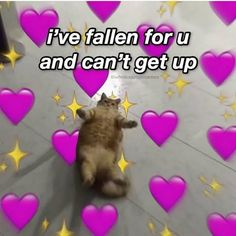 Cat Memes, Funny Memes, Wholesome Pictures, Cute Love Memes, Cute Love Pics, Snapchat Stickers, Crush Memes, Funny Reaction Pictures, Cute Messages