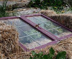 Cold Frames: Good, Better, Best | Fine Gardening