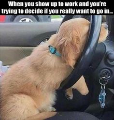 Have a look at the funniest dog memes of 2020 that will make you laugh all day. The best funny dog memes are adorable and funny at the same time. Funny Animal Memes, Funny Animal Pictures, Funny Dogs, Funny Animals, Funny Memes, Hilarious Pictures, Pet Memes, Funny Puppies, Funniest Animals