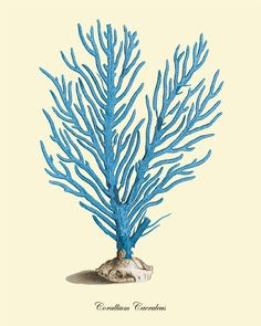 Blue coral art print Vintage nautical art by VictorianWallArt
