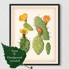 Vintage cactus illustration Cactus art by RestoredBotanicalArt