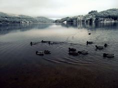 Titisee <3