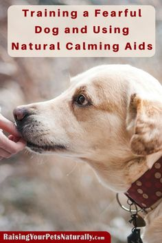 Training a Fearful Dog and Using Natural Calming Aids.