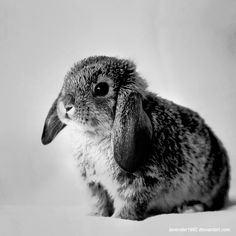 bunny rabbit animals, Black and White Photography