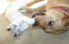 """""""Hey! My nose!"""" - http://www.seethisordie.com/animalsbeingjerks/hey-my-nose/ #animals #cats #funny #fun"""