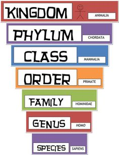 Classical Conversations Cycle 1 - lots and lots of printables, some videos--great resources!