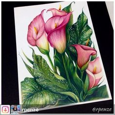 WIP World of Flowers de Johanna Basford - colorindonamadrugada johannabasford worldofflowers rpenze coloringbook coloringbooks… Pencil Colour Painting, Watercolor Pencil Art, Colored Pencil Artwork, Watercolor Flowers, Watercolor Paintings, Pencil Drawings Of Flowers, Art Drawings, Drawing Flowers, Realistic Drawings