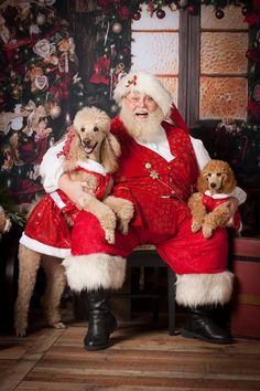 Best of Poodles Dog pictures: Christmas Animals, Christmas Dog, Merry Christmas, Christmas Scenes, Christmas Ideas, French Poodles, Standard Poodles, Animals And Pets, Cute Animals