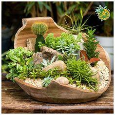 Mini Garden (Terrarium) of Cacti and Succulents. Succulent Planter Diy, Succulent Gardening, Garden Terrarium, Cacti And Succulents, Planting Succulents, Container Gardening, Dish Garden, Garden Pots, Cactus Flower