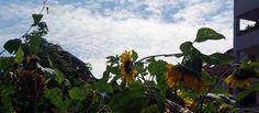 Urban Gardening oder Wildblumen im Balkonkasten - http://sommer-in-hamburg.de/2014/mein-hh/urban-gardening-oder-wildblumen-im-balkonkasten/?utm_source=PN&utm_medium=Supermark&utm_campaign=SNAP%2Bfrom%2BSommer+in+Hamburg