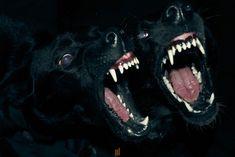 Ferte In Noctem Animam Meam: Photo The Wicked The Divine, Dog Teeth, Aesthetic Images, Aesthetic Art, Airedale Terrier, Werewolf, Dark Art, Monster High, Mafia