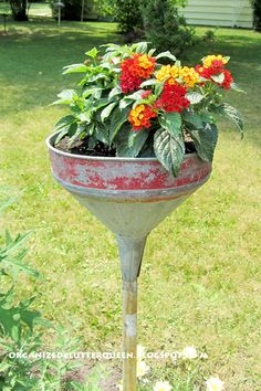 Organized Clutter: Metamorphosis Monday - Lantana in a funnel