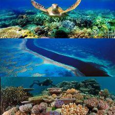 Grande barreira de corais Austrália. Incrível!  Great barrier reef Australia. Amazing! #lugaresparavisitar #lugareslindos  #placesintheworld #placestovisit #beautifulplaces #secretplaces #greatbarrierreef #grandebarrieredecorail #australia by vavahp http://ift.tt/1UokkV2