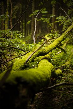 Mossy Tree roots. <3 :)