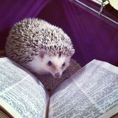 STAFF PIC: Forrest the Hedgehog reading