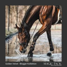Horse playing in water with our MagicTack browband Equestrian Style, Dressage, European Fashion, Outfit Of The Day, Swarovski Crystals, Horses, Water, Today's Outfit, Gripe Water