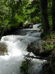 Between the banks of pain and pleasure the river of life flows. It is only when the mind refuses to flow with life, and gets stuck at the banks, that it becomes a problem.  ~Nisargadatta Maharaj
