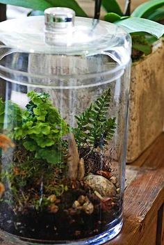 Terrariums. A must have since our stupid cats snack on all my house plants.