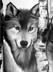 Graphite Drawings - Wolf  by Jerry Winick