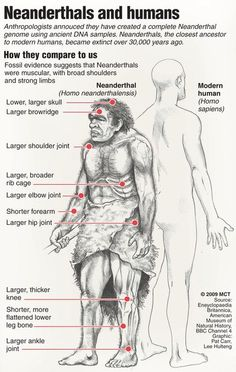 Neanderthals vs. Humans chart wow, neanderthal certainly didn't have such ape like face, they were shorter, stouter, sure, but blond and kinda pretty, like Jeff Bridges