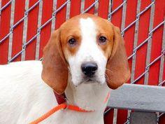 MANCHA...NY...PetHarbor.com: Animal Shelter adopt a pet; dogs, cats, puppies, kittens! Humane Society, SPCA. Lost & Found.