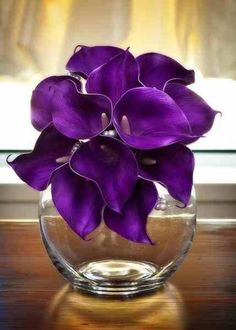 For our 10th Anniversary **************************************Beautiful Deep Purple Lillies!