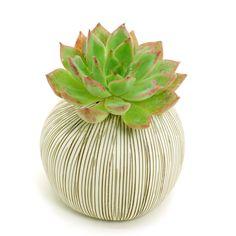 White Porcelain Ceramic Flower Pots / Planter Pots: Brown Stripes Pebble, Cactus, Succulents, Pottery, Vase, Housewarming, Home Décor by BloomyLifePottery on Etsy