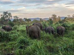 Need some good reasons and inspiration to go to Sri Lanka? Check out my favorite twenty-something Sri Lanka photos