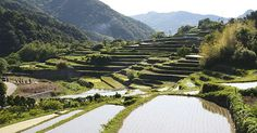 """Nestled up against the mountains in Shodoshima's interior are the Senmaida or """"one thousand rice fields"""""""