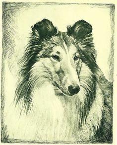 Dog Art Print 1935 Collie Dog by Malcolm Nicholson VINTAGE