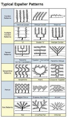 Chart of espalier shapes