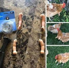 The Most Hilarious Photos on the Internet Currently - We Should Be Working Best Funny Pictures, Funny Photos, Cool Photos, Funny Animals, Funniest Animals, T Rex, Prehistoric, Internet, Lol