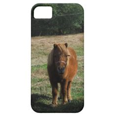 Brown miniature horse iPhone 5/5S cover