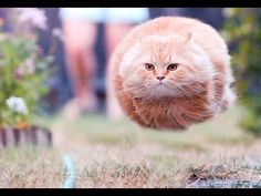 TOP VIDEOS FUNNY CUTE CAT AND KITTEN COMPILATION - LAUGH SO HARD YOU'LL CRY
